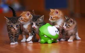 feline, cat, animals, kittens, baby animals, toys