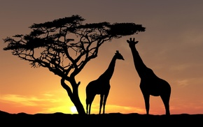 trees, animals, nature, Africa, sunset, giraffes