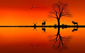 animals, trees, sunset, landscape, photo manipulation, reflection