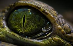 eyes, crocodiles, reptile, macro