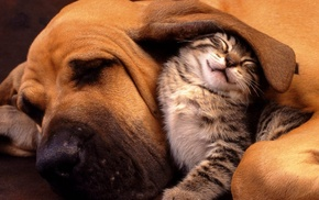 nature, dog, hounds, friendship, kittens, cat