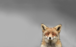 fox, smiling, simple background, animals