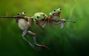 animals, amphibian, frog, nature, twigs