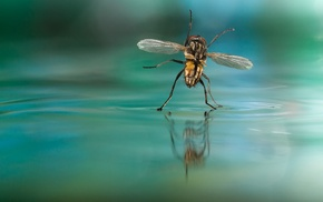 Fly, water, nature