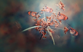depth of field, insect, nature, butterfly