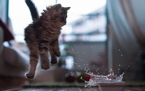 wooden surface, jumping, water, cat, animals, splashes