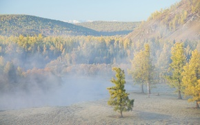 forest, nature, hill, landscape, mist