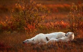 grass, field, polar bears, global warming, baby animals, nature