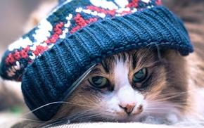 cat, animals, woolly hat