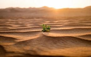 sand, landscape, nature, desert, dune, plants