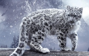 snow, leopard, animals, nature, snow leopards, winter