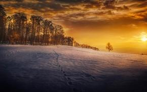 seasons, footprints, sky, winter, trees, landscape