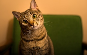 cat, depth of field, green, green eyes, animals