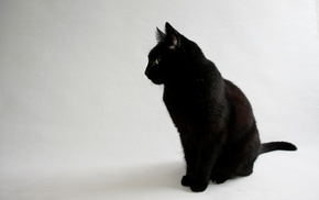 white background, simple background, black cats, cat, animals