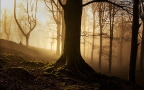 forest, wood, roots, trees, branch, mist