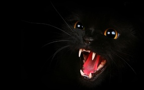 black cats, open mouth, animals, cat