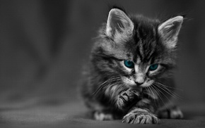 texture, selective coloring, blue eyes, kittens, cat, baby animals