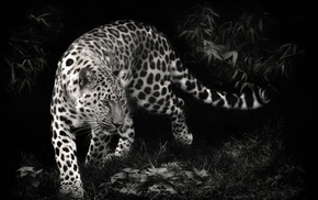 animals, leopard, photo manipulation