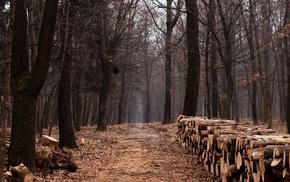 nature, trees, wood, fall, tree stump, dirt road