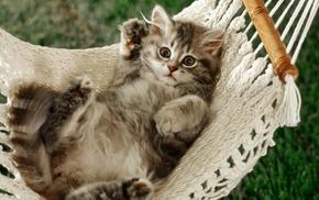 cat, kittens, hammocks, animals