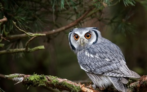 yellow eyes, branch, nature, forest, owl, animals