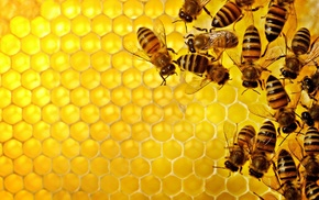 pattern, geometry, nature, texture, hexagon, insect