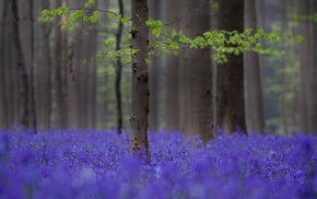 depth of field, trees, flowers, nature, field, forest