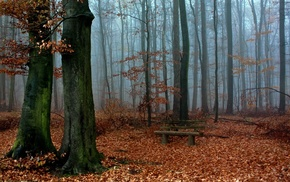 forest, landscape, bench, nature, fall, mist