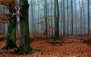 forest, landscape, bench, nature, fall, mist