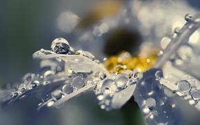 flowers, depth of field, water drops, macro