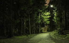 dirt road, nature, forest, branch, landscape, green