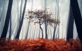 fall, trees, wood, silhouette, plants, nature