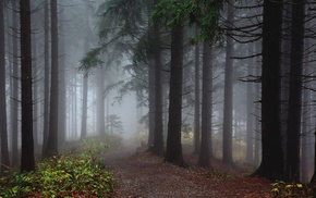 wood, fall, forest, trees, mist, path