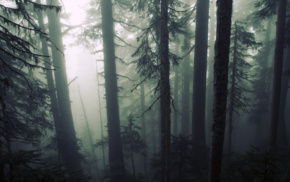 wood, plants, trees, mist, forest, leaves