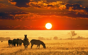 Sun, animals, sky, nature, landscape, zebras
