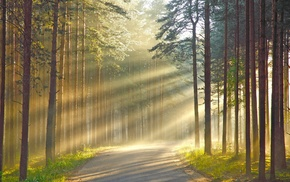 road, forest, wood, sun rays, leaves, branch