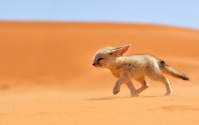 fox, animals, desert, nature, fennec