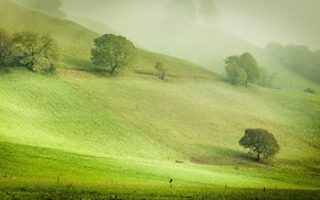 field, hill, green, bench, trees, nature