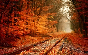 red, branch, leaves, plants, railway, depth of field