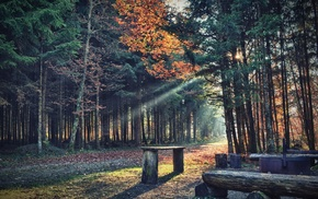 path, shadow, sun rays, bench, trees, forest