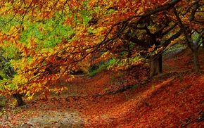 leaves, trees, fall, nature, plants, colorful