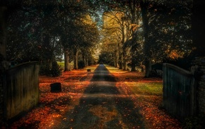 trees, road, nature, fall, gates, landscape