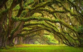 trees, landscape, grass, ancient, oak trees, nature