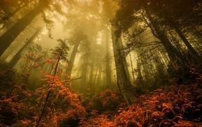 forest, nature, landscape, morning, fall, mist