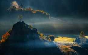 field, trees, morning, Romania, nature, mist