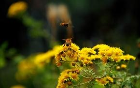 flowers, bees, macro