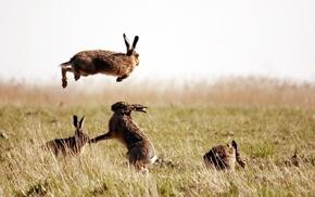 grass, rabbits, nature, animals