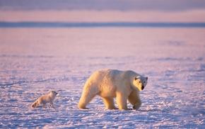 polar bears, snow, animals, Friends