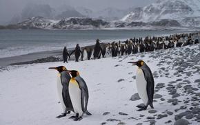 penguins, birds, landscape, animals, nature