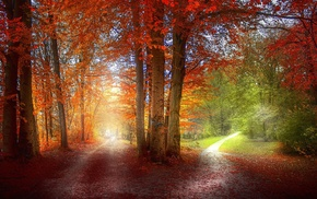grass, orange, path, red, landscape, trees